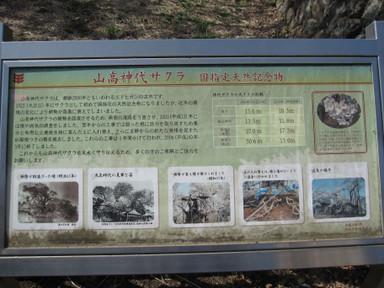 Yamataka_jindai_zakura20120413_sets