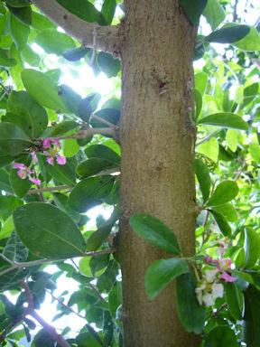 Floral_garden_obuse090809_008