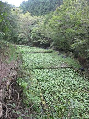 Kawanoriyama090919_028