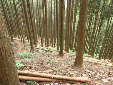Kawanoriyama090919_034