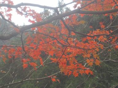Kawanoriyama091107_012