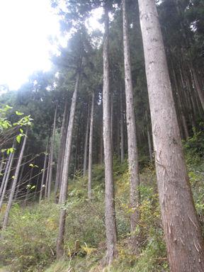 Kawanoriyama091107_017