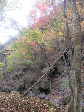 Kawanoriyama091107_019