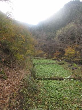 Kawanoriyama091107_020