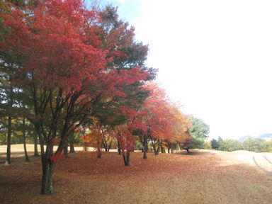 Ikaho_country_club091114_007