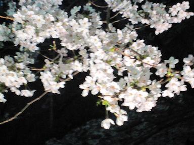 Hanami100402_003