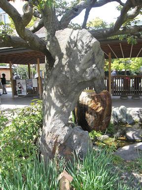 Kiyosumi_garden100418_002