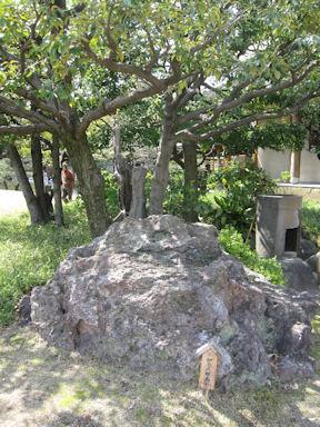Kiyosumi_garden100418_004