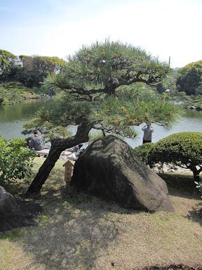 Kiyosumi_garden100418_007
