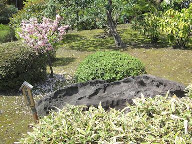 Kiyosumi_garden100418_008