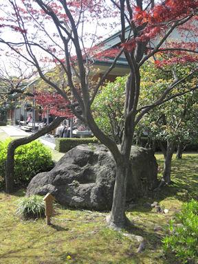 Kiyosumi_garden100418_009