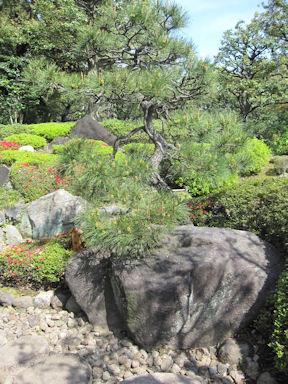 Kiyosumi_garden100418_010