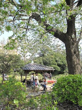 Kiyosumi_garden100418_017_2