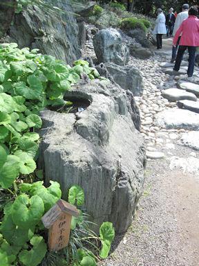 Kiyosumi_garden100418_023
