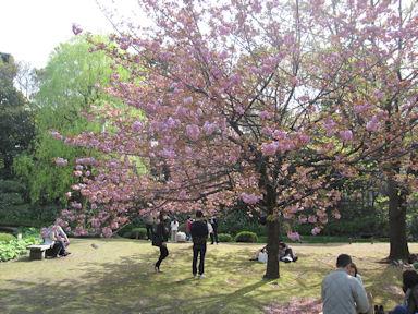 Kiyosumi_garden100418_026