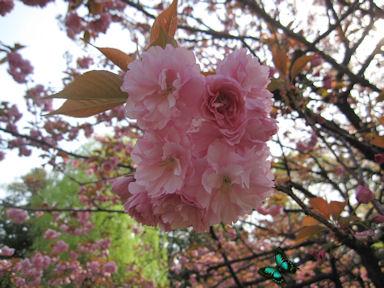 Kiyosumi_garden100418_028