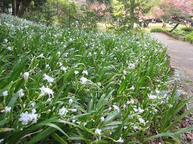 Kiyosumi_garden100418_030