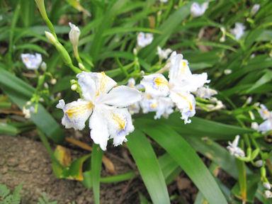 Kiyosumi_garden100418_031