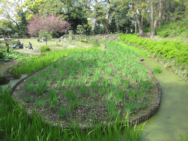 Kiyosumi_garden100418_032