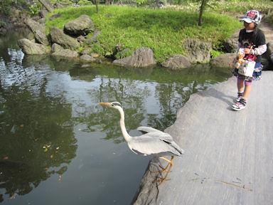 Kiyosumi_garden100418_040