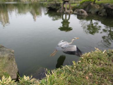 Kiyosumi_garden100418_041