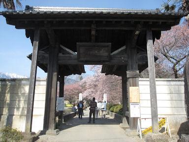 Yamataka_jindai_zakura20120413_002