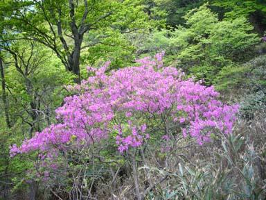 Hinokiboramaru070520_022
