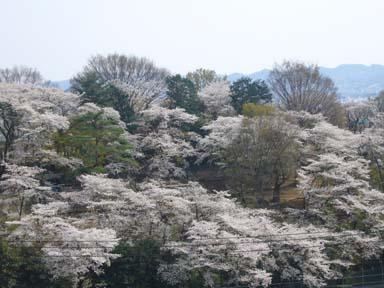 Kiryugaokakoen007