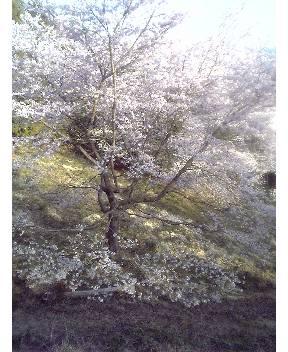 桜山公園第二駐車場付近(鬼石町)