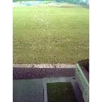 ファーストゴルフ